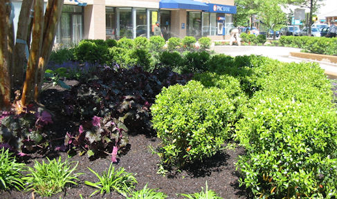 commercial-landscaping-pnc2