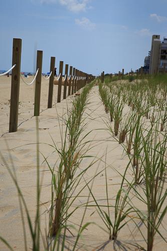 Beach and Dune Restoration